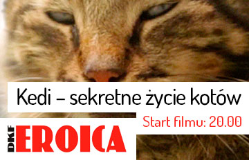 Zdjęcie DKF Eroica: Kedi – sekretne życie kotów