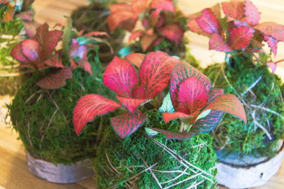 Relacja Uniwersytet Trzeciego Wieku: Warsztaty florystyczne